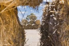burrumbuttock-hay-run-cunnamulla-