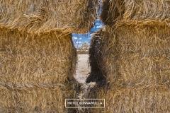 burrumbuttock-hay-run-cunnamulla-7953