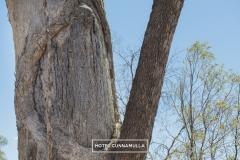 cunnamulla-indigenous-cultural-tourism-8063