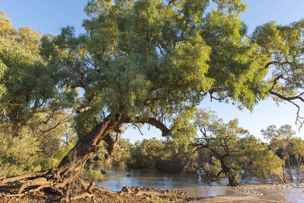 Warrego River Cunnamulla Bushlands